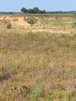 Heide und Magerrasen