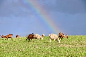 ökologische Landschaftspflege mit Schafen und Ziegen